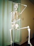 骨 関節 説明