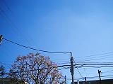 s-2011年11月10日_IMG_1359