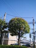 s-2012年10月08日_IMG_1685
