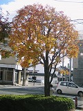 s-2012年11月09日_IMG_1714