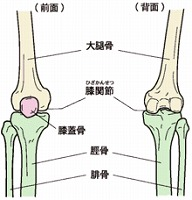 s-膝関節