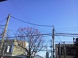 s-NEC_0164.jpg